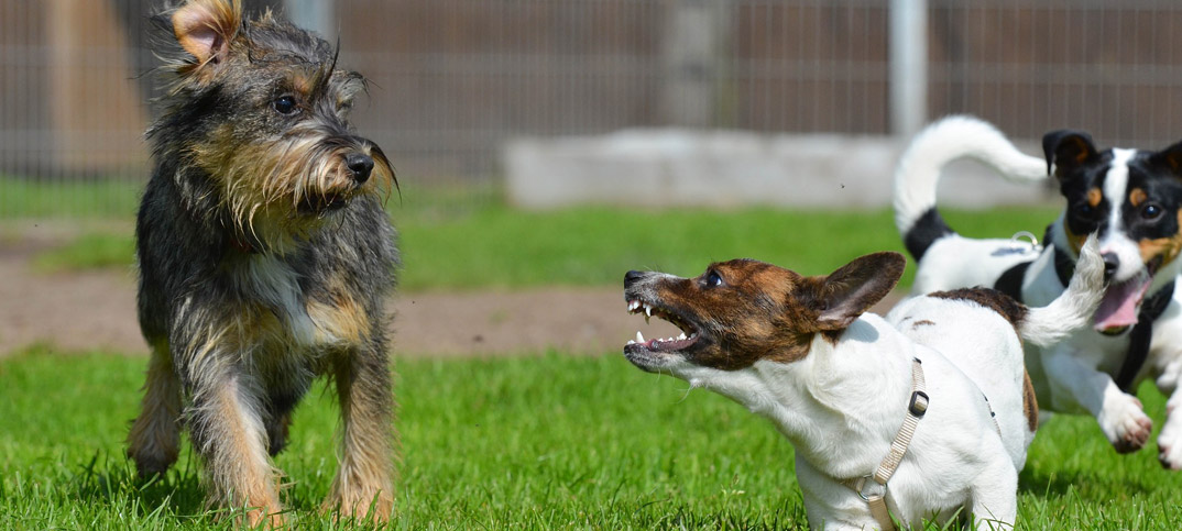5 Do's And Don'ts - Dog Park Etiquette - Pampered Pets