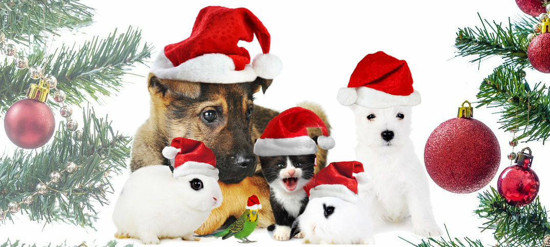 Christmas and your pet